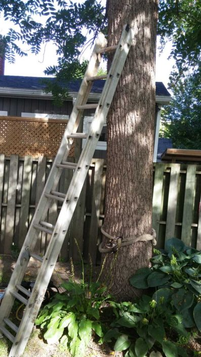 Ladder against Tree