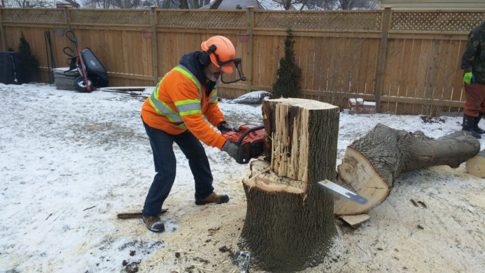 Cutting up tree stump