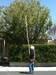 tree trimming by a pro