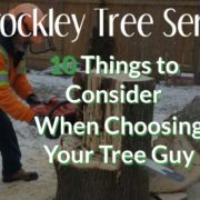 tree guy arborist 10 things to consider choosing tree guy