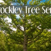 Summer Tree Care Care For Trees Tree Care Brockley Tree Service London Ontario