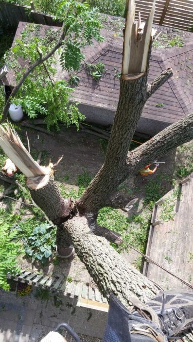 Top View Tree Cutting