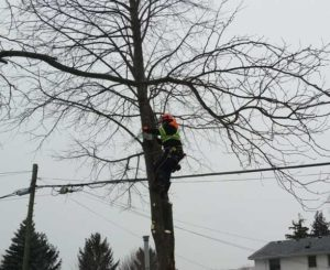 In Tree working