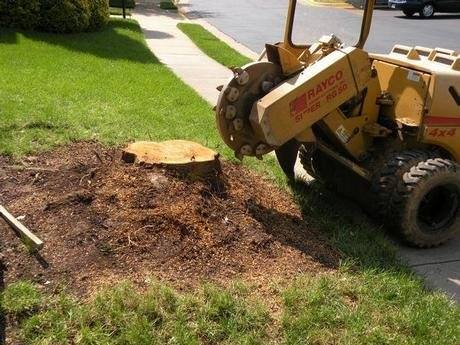 Stump Removal