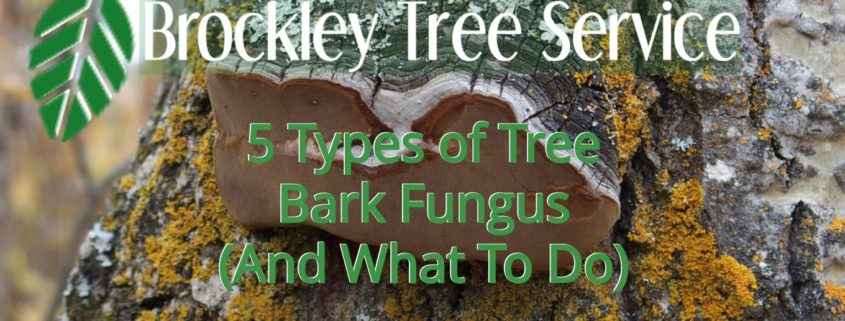 tree bark fungus blog header