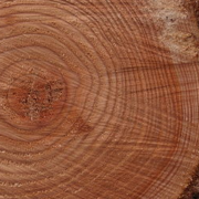 Tree Rings Forest Wood