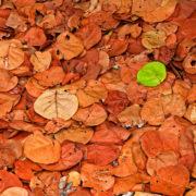 brockley tree brown leaves summer image