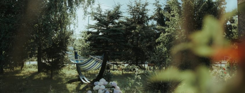 tree ownership backyard view brockley tree service