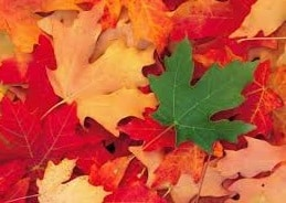 leaves on ground summer leaves brockley tree service london ontario