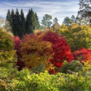 brockley tree service fall colours seasonal blog header