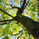 Maple Tree background Green daylight Tree removal Tree trimming services
