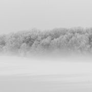 Snow in a field Trees in a field Brockley Tree service