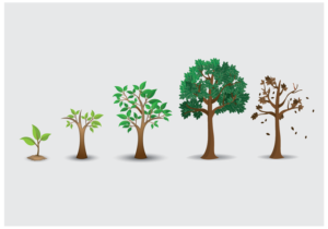 life cycle tree