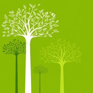 tree talk, tree communication