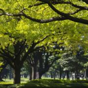 trees communication, trees talk, tree talk, tree science