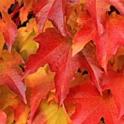 great places to see autumn leaves header