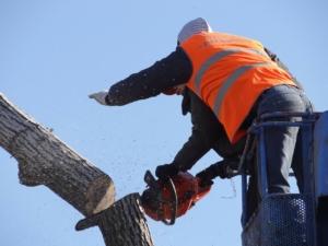 cut down a tree equipment