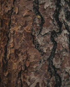 Tree bark damage - Brockley Tree