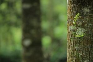 arborists vs tree surgeons tree trunk - brockley tree