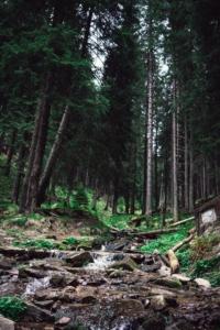 arborists vs tree surgeons woods - brockley tree