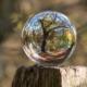 arborists vs tree surgeons blog - brockley tree