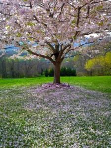 colourful tree - brockley tree