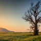 deadwooding blog featured image - brockley tree