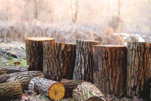 deadwood dead logs - brockley tree