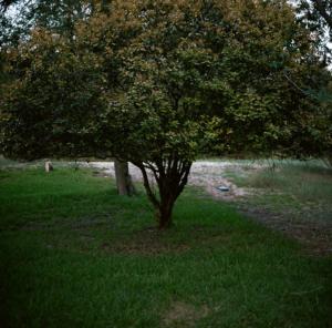 Brockley Tree Trimming