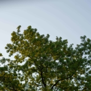 Brockley Tree Service - Tree Bloom - Featured Image