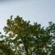 Brockley Tree Service - Tree Bloom - Featured Image