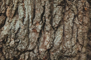 Brockley-tree-service-tree-bark-body-image